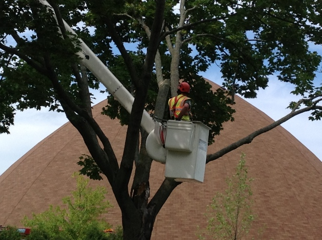 treecutting2